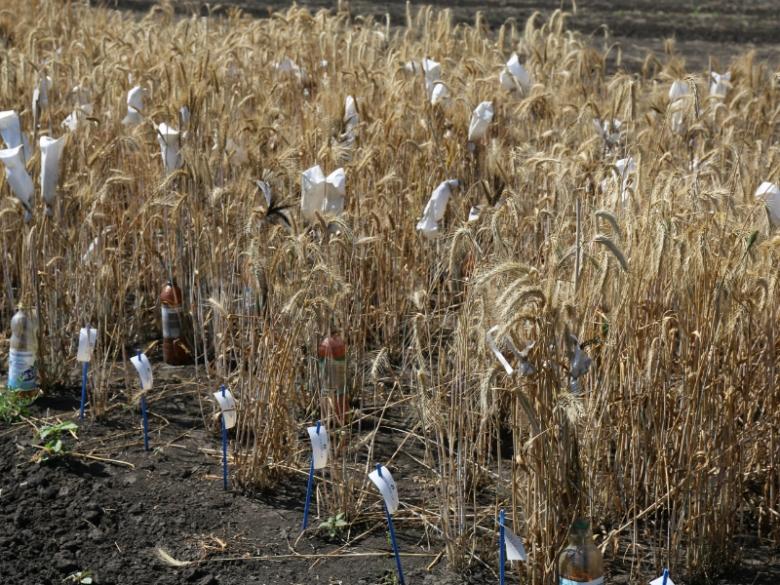 Девять семеноводческих проектов получили 153 млн рублей