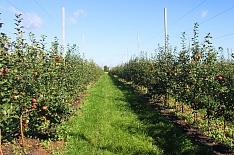 «Агро-Белогорье» расширяет яблоневый сад вдвое