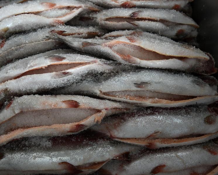 Рыба для Кремля. История одного из старейших рыбохозяйств России