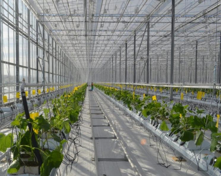 «Чурилово» откроет первый в Курганской области тепличный комплекс