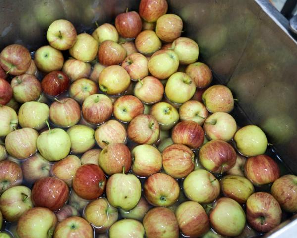 Республика Белоруссия смогла поставить вРФ в5 раз больше яблок, чем вырастила