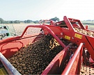 Картофельная дилемма: как сохранить рентабельность при производстве картофеля