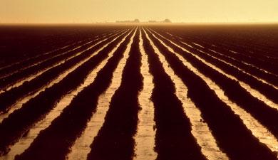 Борозды сканавками повышают урожайность