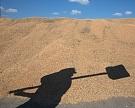Экспортные цены на пшеницу выросли впервые за восемь недель