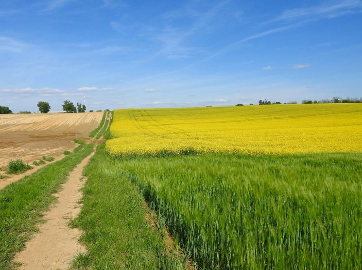 Урожай вНовосибирской области может стать минимальным зачетыре года