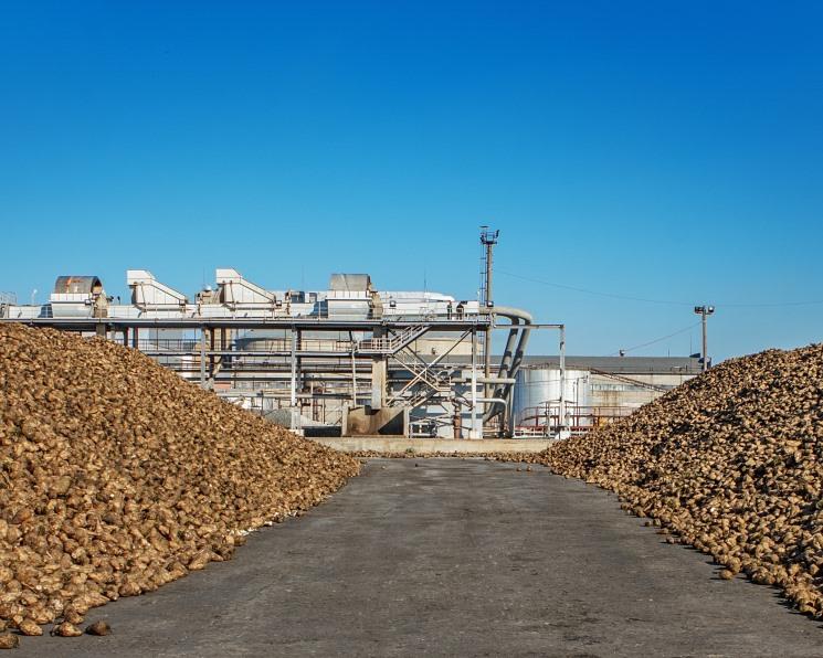 Прогноз производства сахара в России снижен
