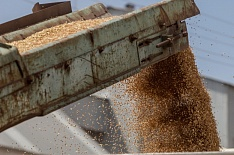 Внутренние цены на пшеницу возобновили рост