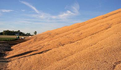 ВСибири— зерновой рекорд