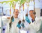 Bayer Crop Science инвестирует 1млрдевро в исследования и разработки