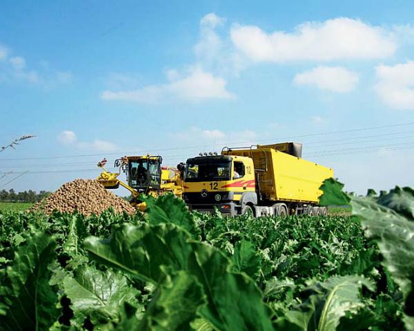 «Агросила Групп» засеяла сахарной свеклой свыше 30 тыс. га