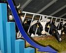Мясные скотоводы хотят объединиться