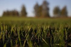 Эксперты сохраняют прогнозы высокого урожая зерна в 2019 году