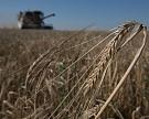 Кредитование сезонных полевых работ выросло на 6%
