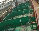 «НПЦ Акватория» построит в Краснодарском крае аквакультурный комплекс