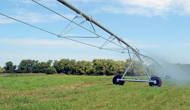 РГАУ-МСХА оптимизирует полив кормовых угодий