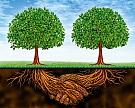 В сельском хозяйстве продолжается консолидация за счет слияний и поглощений