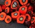 Маркировка продукции с пальмовым маслом станет обязательной