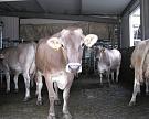 «ЭкоНива» купила два молочных комплекса вКалужской иВоронежской областях