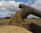 Качество пшеницы снизилось
