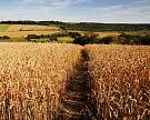 Рекордный урожай поддержит ВВП и сдержит инфляцию