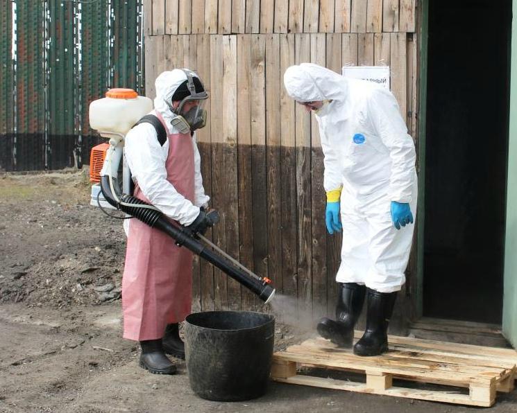 Россельхознадзор обвинил ФСИН враспространении чумы свиней