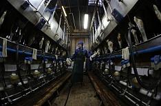 Рейтинг производителей молока возглавили «ЭкоНива» и«Агрокомплекс»