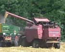 Сбор зерновых приблизился к 50 млн тонн