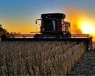 Урожай сои в этом году будет рекордным