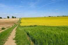 Урожай в Новосибирской области может стать минимальным за четыре года