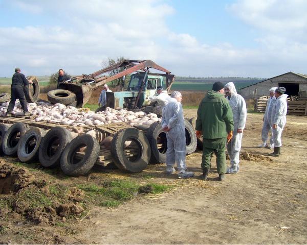 Дворкович объявил онеобходимости резкого понижения популяции дикого кабана