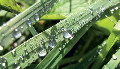 Растения станут поливать росой