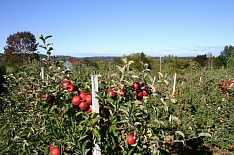 Российско-сербская компания заложит тысячу гектаров сада