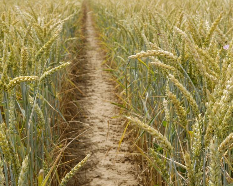 Стратегия развития зерновой отрасли потребует 4,4 трлн рублей