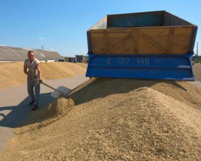 Экспорт зерна в Египет вырастет