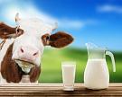 Органическое молоко нелучше обычного