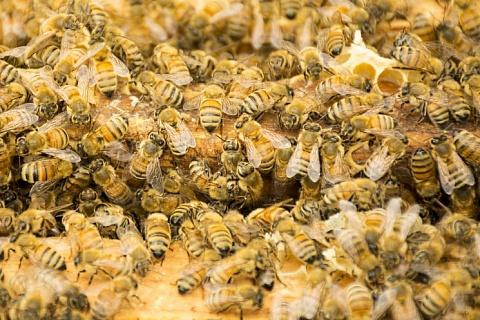 Ущерб от гибели пчел может составить триллион рублей