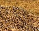 Россия впервые начала экспортировать фуражную пшеницу