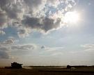 Эксперты повышают прогнозы по урожаю зерновых