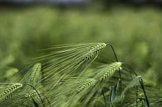 Минэкономразвития ожидает рост сельского хозяйства на 11% к 2024 году