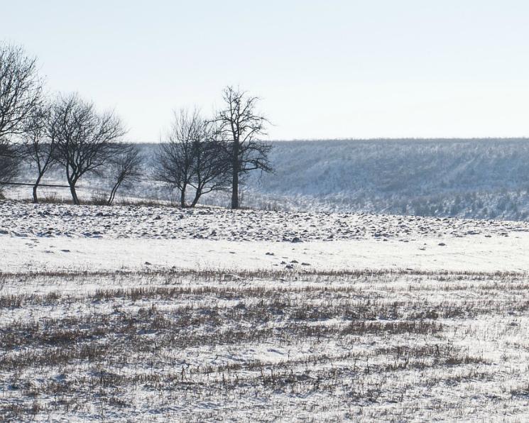 Ряду регионов грозит вымерзание озимых