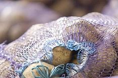 Брянская область собрала рекордный урожай картофеля