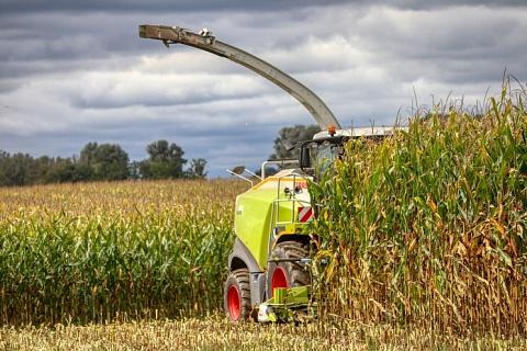Урожайность кукурузы ожидается рекордной