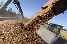 За год цены на пшеницу выросли на 47%