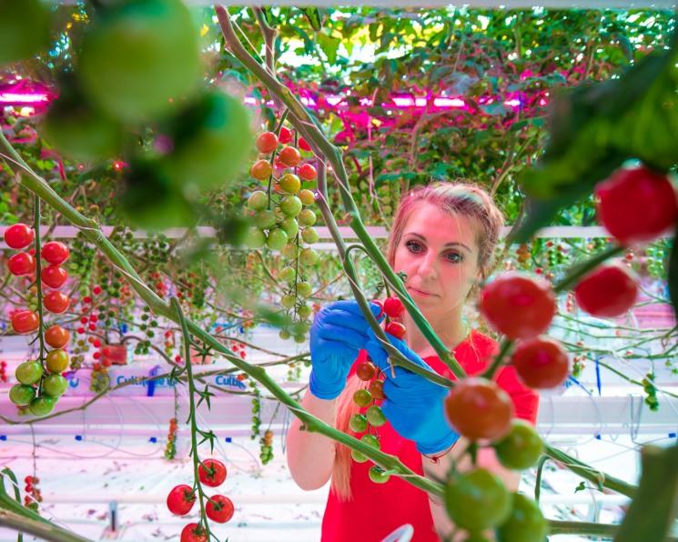 «Агро-Инвест» увеличит площадь теплицы с LED-освещением