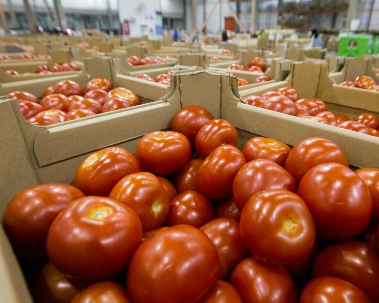 Импорт турецких томатов может возобновиться воктябре