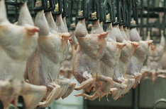 Петелинская птицефабрика оштрафована на 700 тысяч рублей