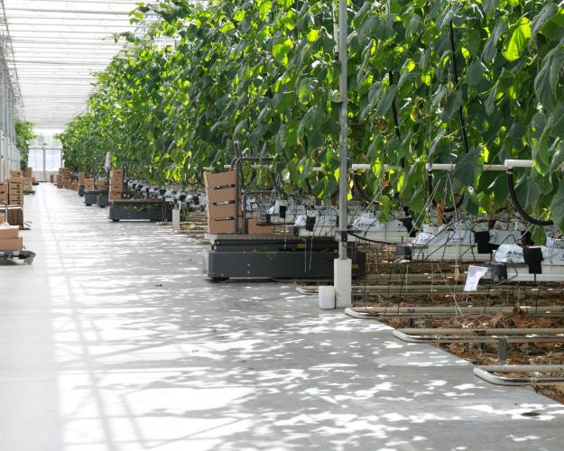 «Воловский бройлер» намерен построить 100 гектаров теплиц