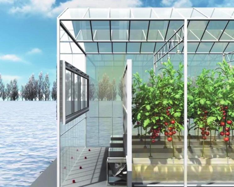 Овощи за стеклом. Как снизить затраты на производство овощей в защищенном грунте