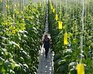 Северная Корея арендует у России землю для сельского хозяйства