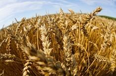 10 регионов произвели почти 40% сельхозпродукции в стране